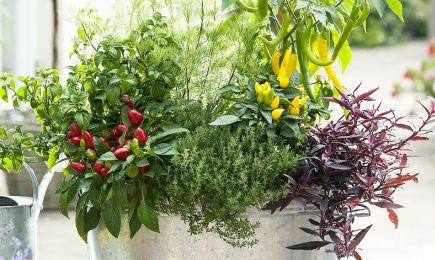 Set de semințe Super recolte | GrădinaMax