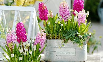 Shopping de bulbi de flori | GrădinaMax
