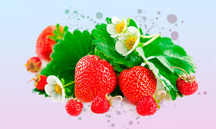Shopping de căpșuni! | GrădinaMax