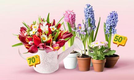 Super Sale la bulbi de flori | GrădinaMax