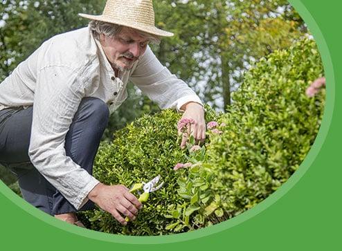 Catalog - -60% la plante ornamentale - GrădinaMax România